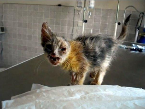 chica salva gato desfigurado en estambul y lo convierte en su mejor amigo 4