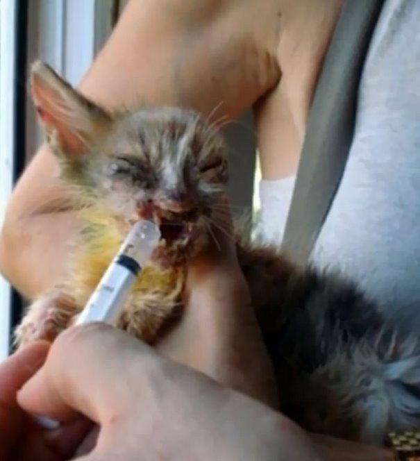 chica salva gato desfigurado en estambul y lo convierte en su mejor amigo 5