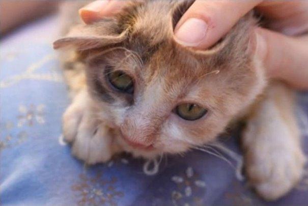 chica salva gato desfigurado en estambul y lo convierte en su mejor amigo 6