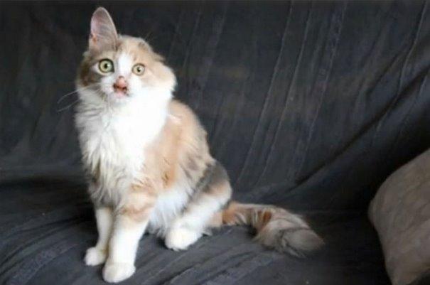 chica salva gato desfigurado en estambul y lo convierte en su mejor amigo 8