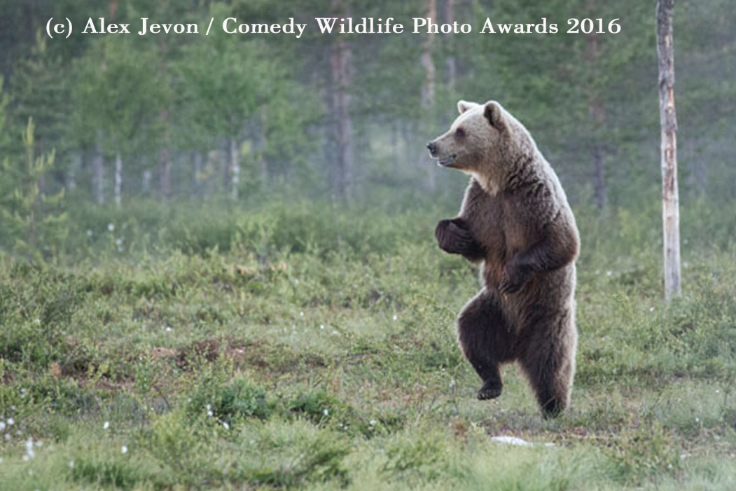 comedy animales 2016 18
