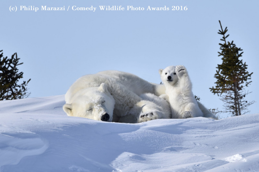 comedy animales 2016 20