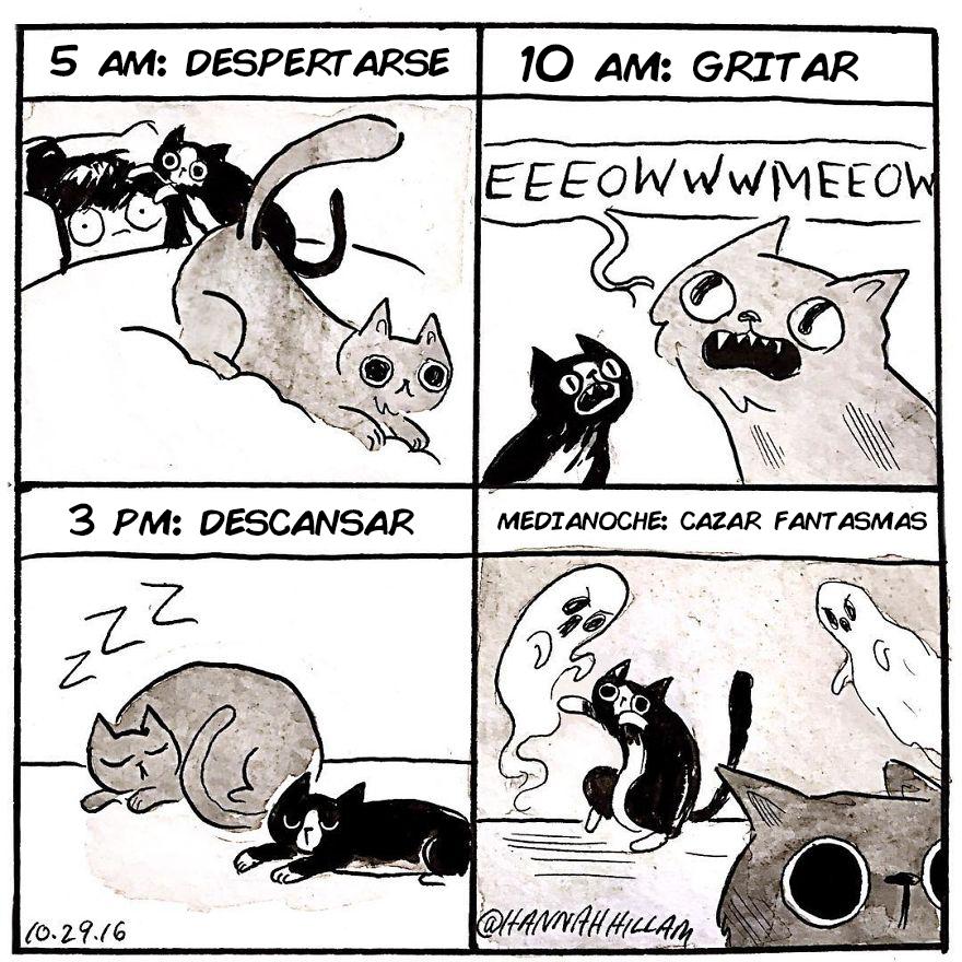 comics de gatos de Hannah Hillam 12