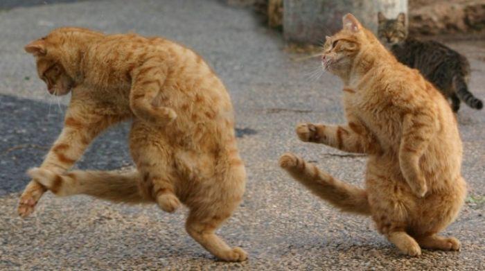 gatos_10