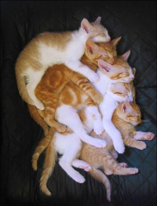 gatos_16