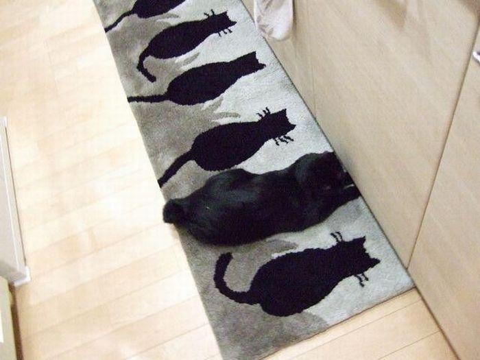 gatos_22