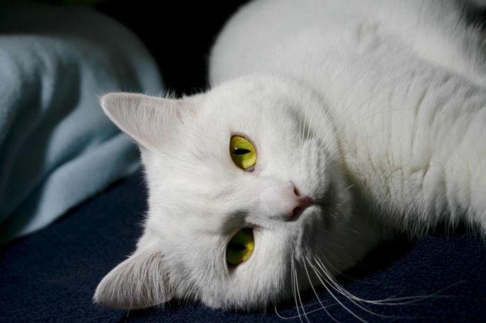 gatos_7