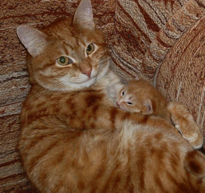 gatos_8