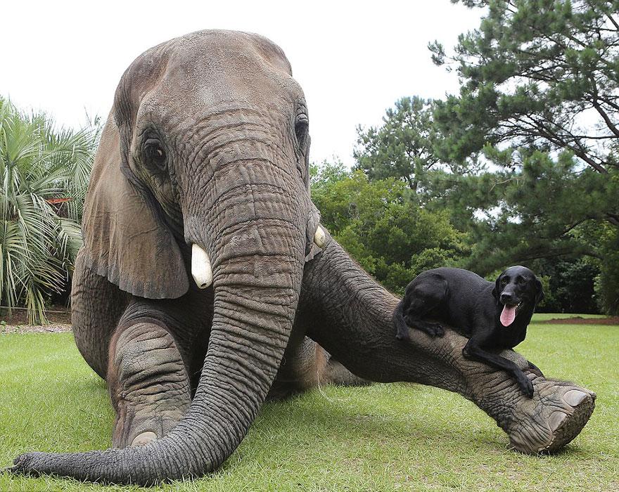 perra y elefanta amigas para siempre