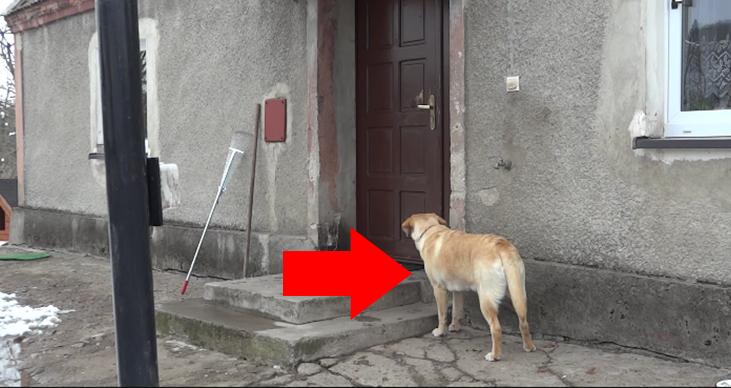 perro-llama-puerta