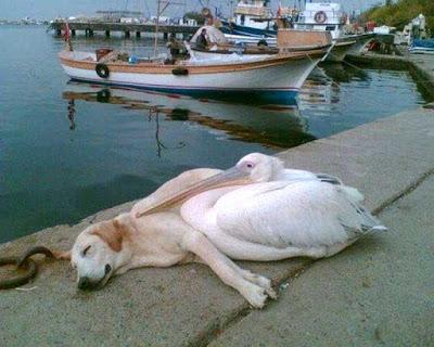 perro y pelicano