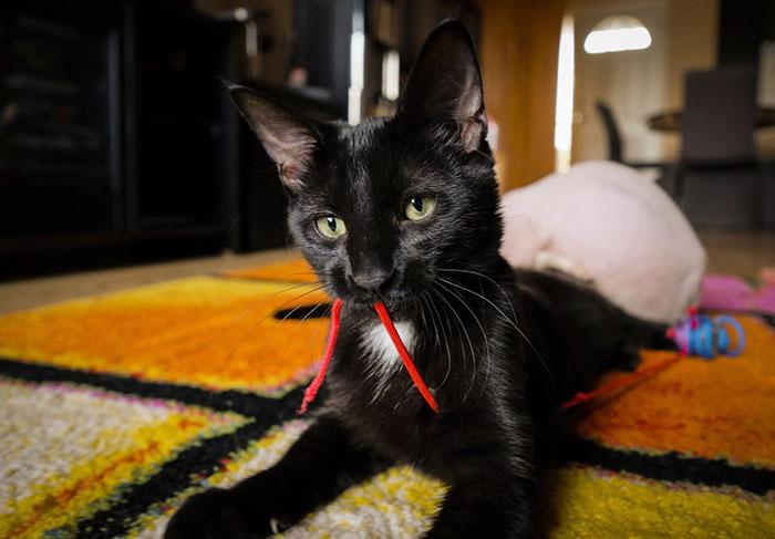 gatitos depilados como si fueran sphynx 5