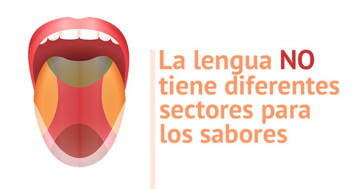 lengua-sectores-sabores