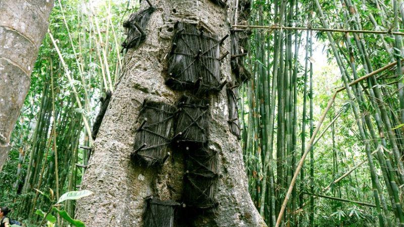 los arboles que tienen cadaveres de ninos en toraja 5