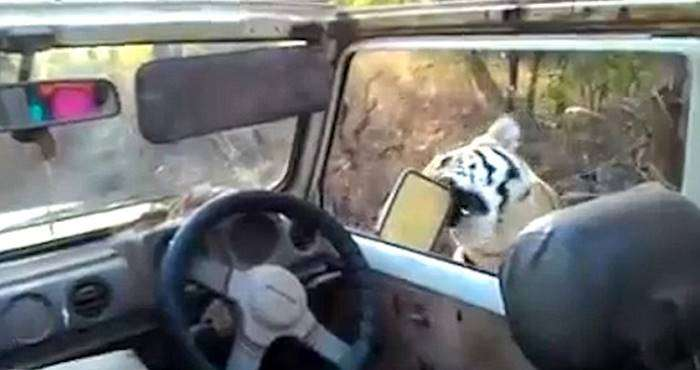 un tigre se pasea cerca de un coche sin puertas 4