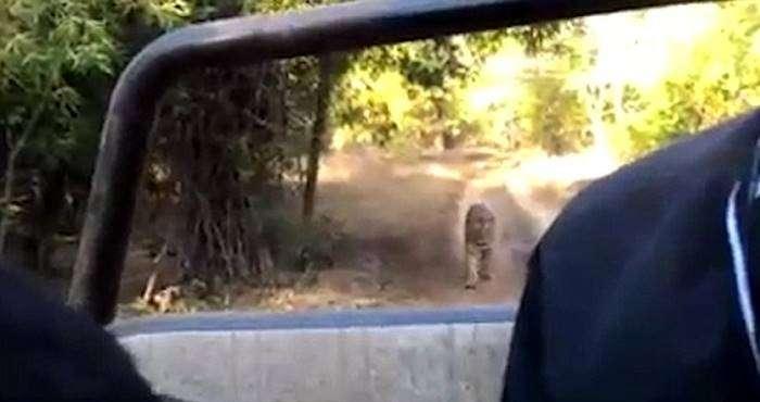 un tigre se pasea cerca de un coche sin puertas 6