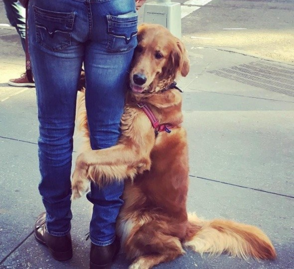 La golden retriever obsesionada con abrazar a la gente