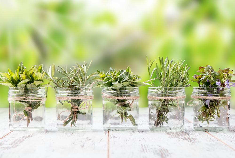 10 hierbas arom ticas que puedes cultivar en agua durante for Plantas en agua interior