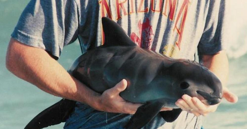 vaquita-marina
