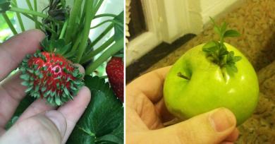 fruta-madurando