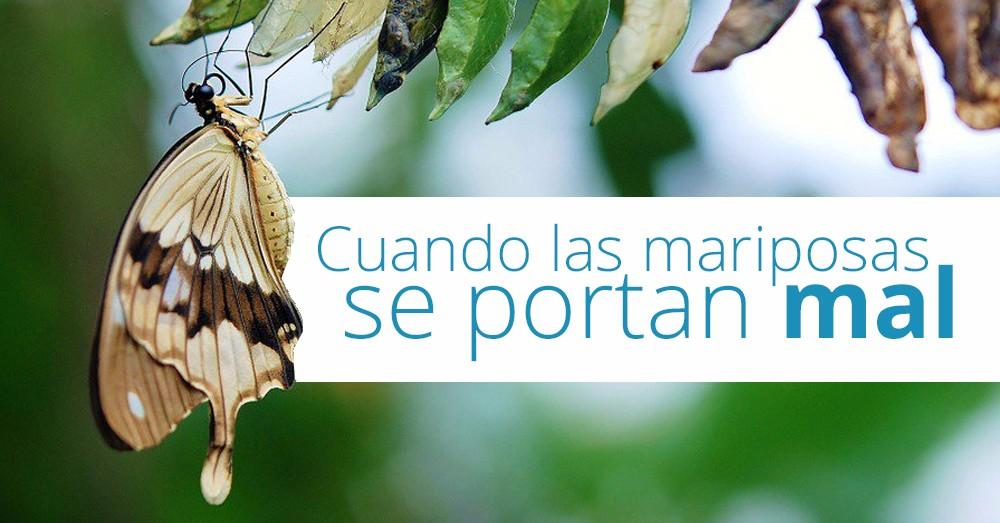 mariposas-malas