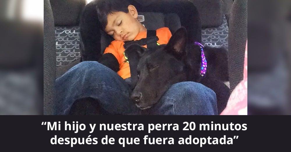 perros-adoptados