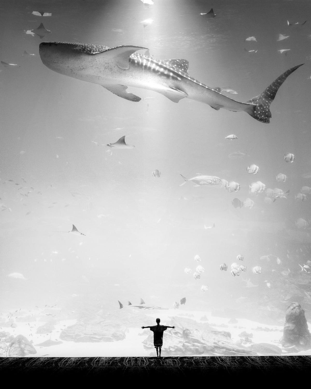 fotografo-blanco-y-negro-10