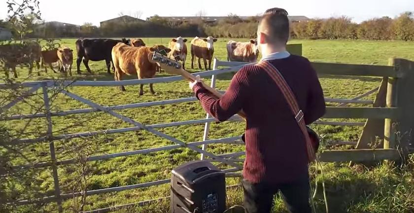 guitarra-y-vacas