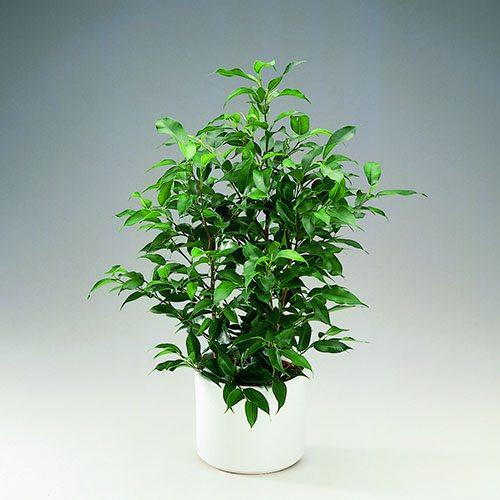 plantas resistentes 01 2 - 10 plantas de interior que no vas a ser capaz de matar