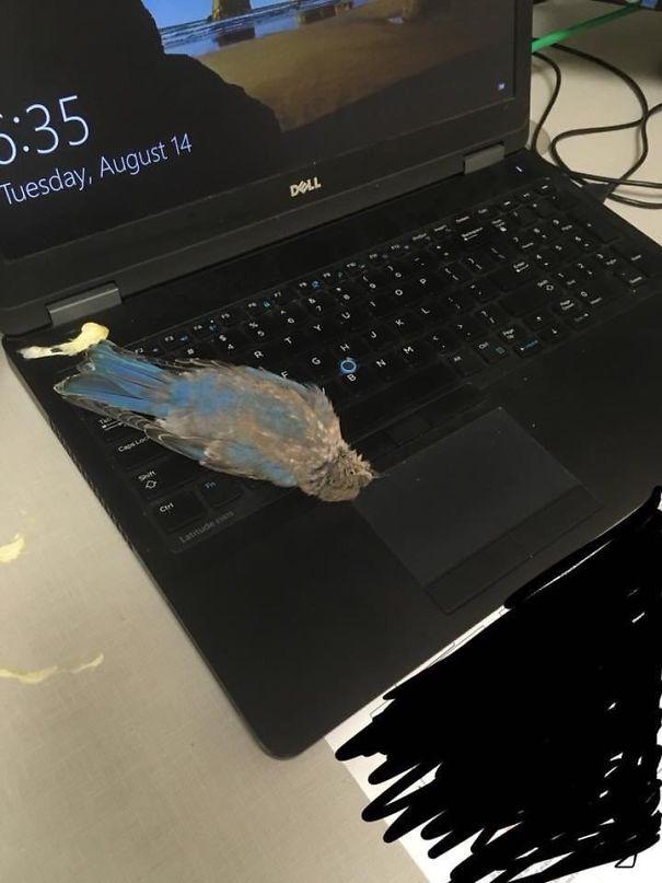 mal día, ave