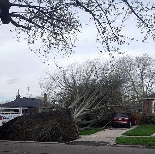 mal día, árbol