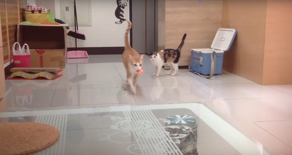 gatos, hogar