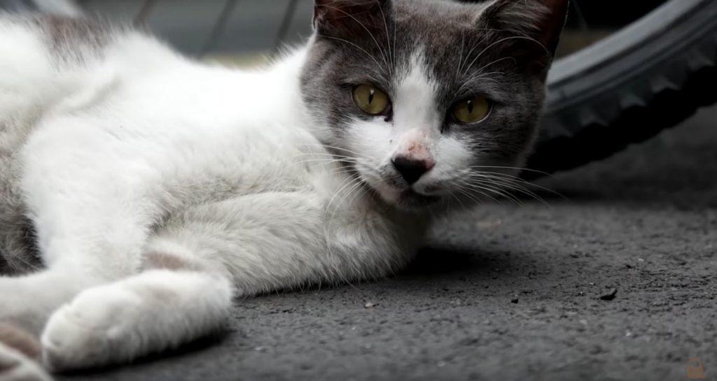 gatos, calle