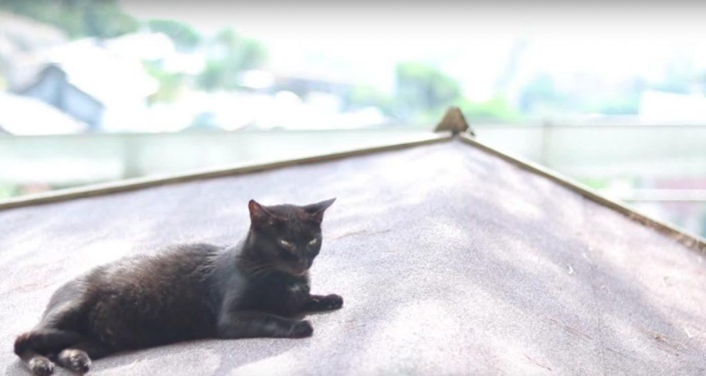 gato, tejado