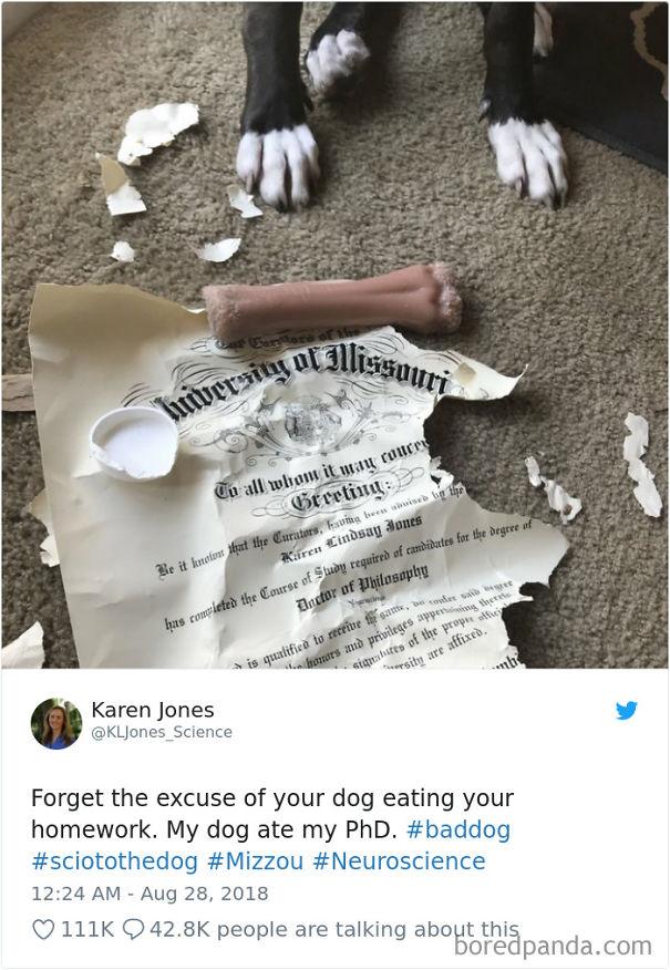 mal día, diploma