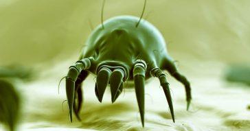 Acaro microoscopio