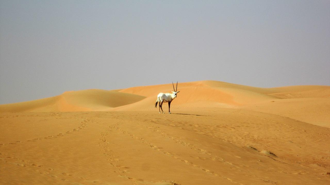 2 lugares expulsados de la lista Patrimonio de la Humanidad