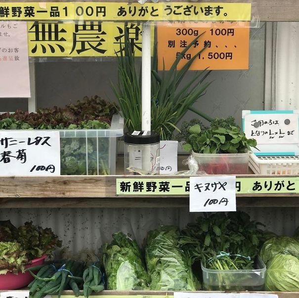 japoneses, planta