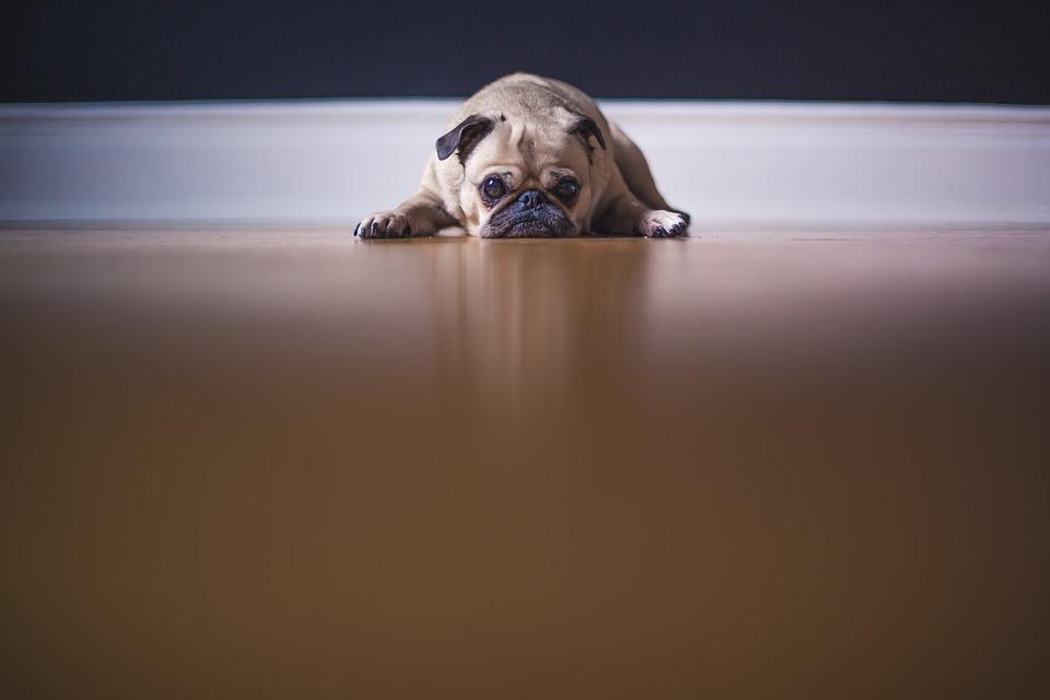 perros, depresión