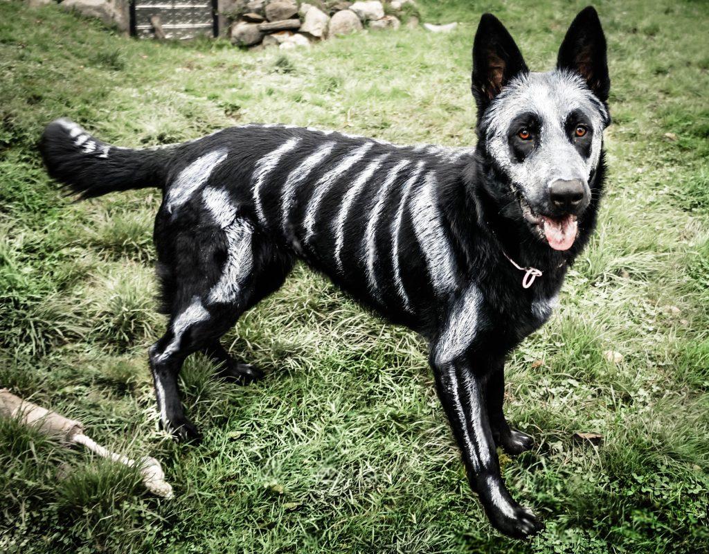 disfraces de halloween para mascotas