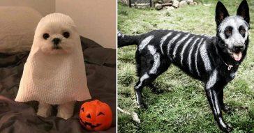 disfraces-mascotas-halloween