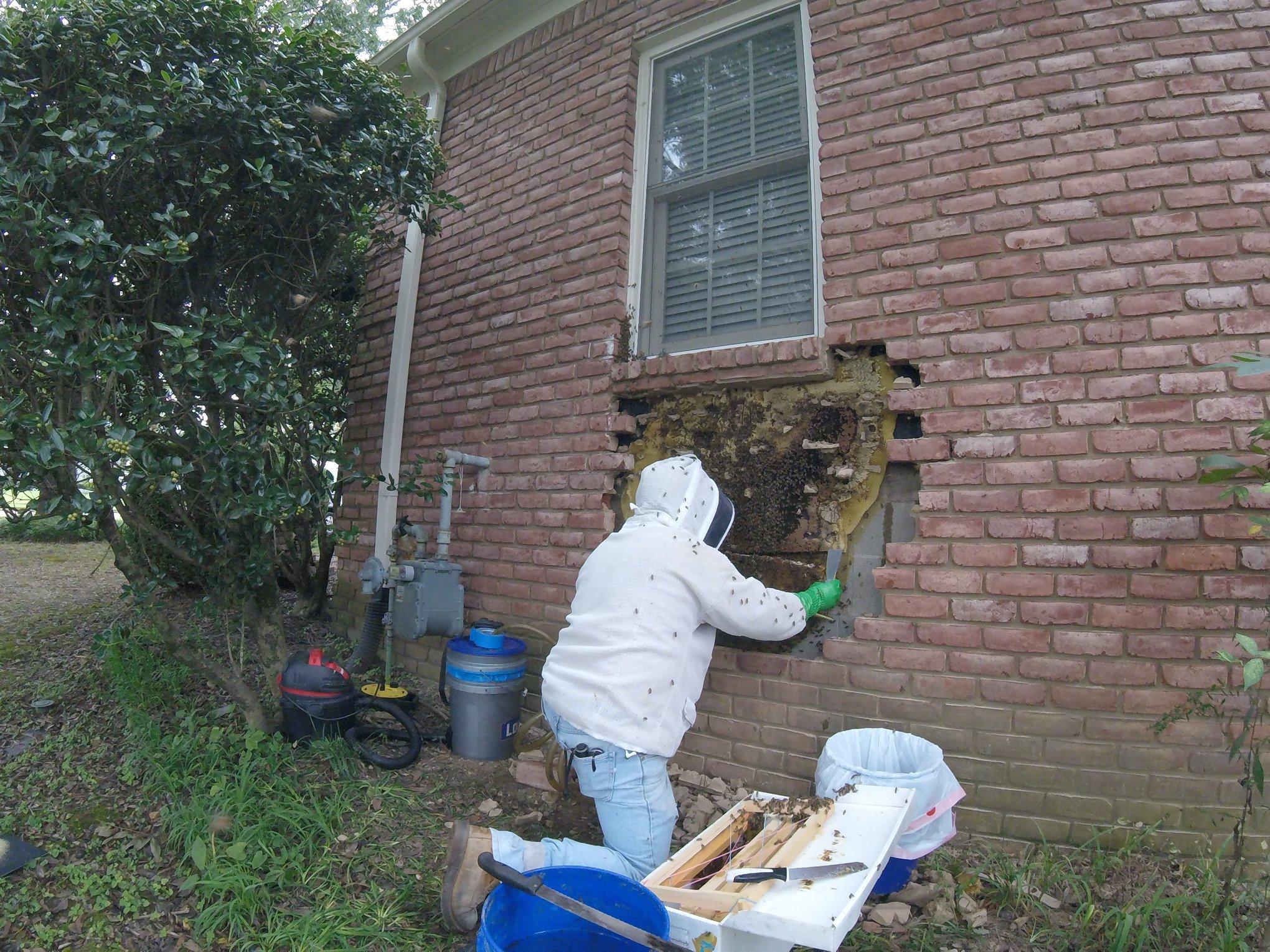removiendo, abejas
