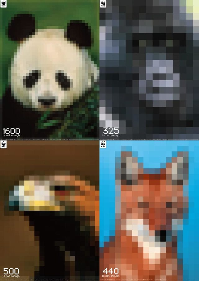 animales, extinción, resolución
