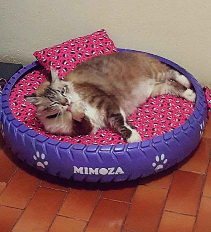 Cama de Mimoza