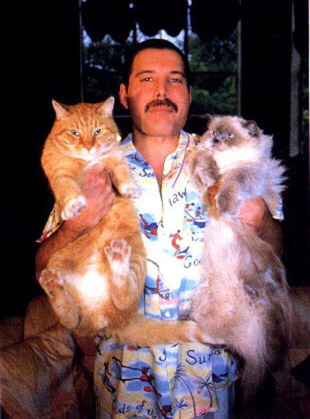 Freddie Mercury y sus gatos