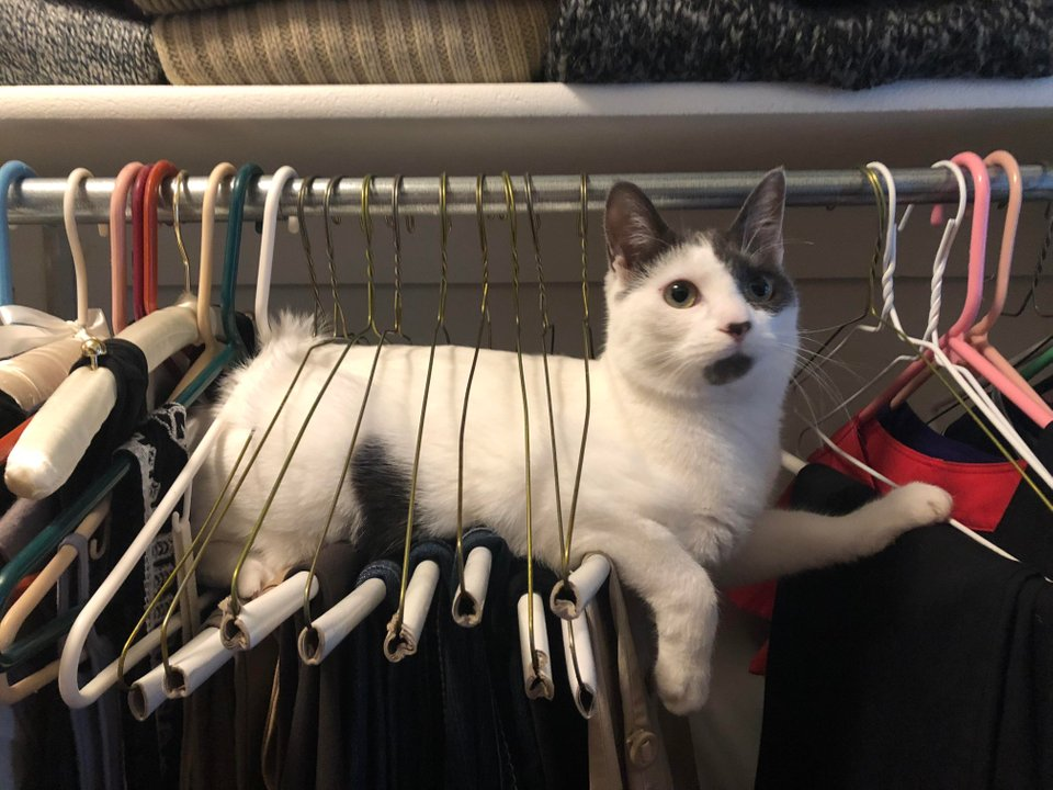 Animales: Gato en el armario