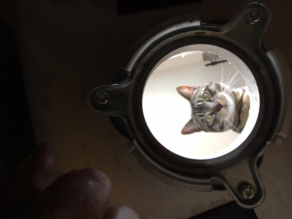 Animales: Gato observando asustado