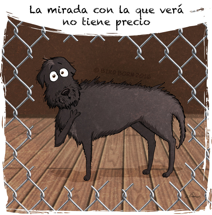 comic adopcion de animales 10