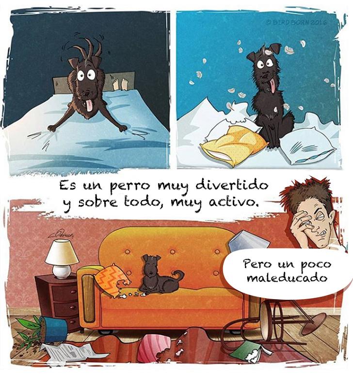 comic adopcion de animales 4