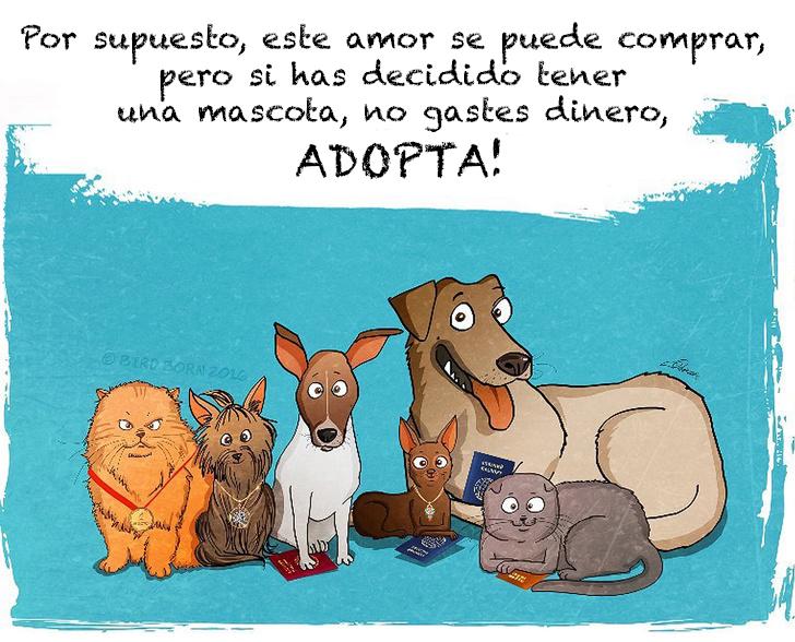 comic adopcion de animales 9